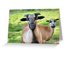 Friendly Animals (Saxony, Germany) Greeting Card
