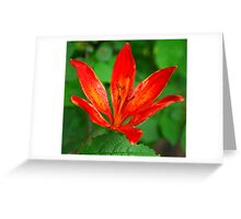 Beauty - Lilly Greeting Card