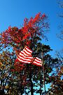 Autumn Americana by NatureGreeting Cards ©ccwri