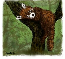 Red Panda Napping by SRolfe
