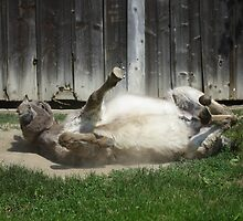Dust Bathing Donkey by Mythos57