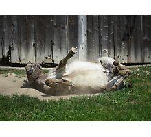 Dust Bathing Donkey Photographic Print