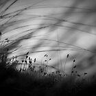 Wilderness by Dorit Fuhg