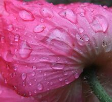 Poppy In The Rain by Tracy Faught