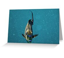 Picasso Trigger fish #2 Greeting Card