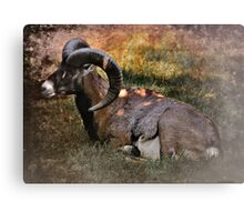 Big Horn Canvas Print