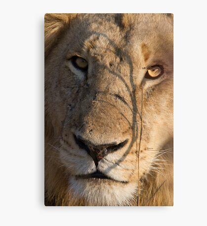 Majingilane - Male Lion - Close Up ! Canvas Print