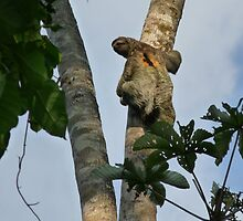 three toed sloth by PELAGIC0