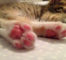 Kitten Toes by Vixeth