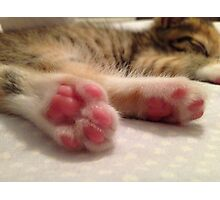 Kitten Toes Photographic Print