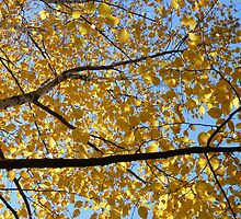 leaves of gold by Fran E.