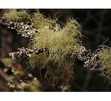 Little Lichen Photographic Print