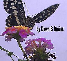 Wonders of Nature by Dawn B Davies-McIninch