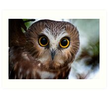 Northern Saw Whet Owl Portrait Art Print