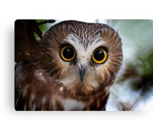 Northern Saw Whet Owl Portrait Canvas Print