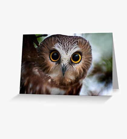Northern Saw Whet Owl Portrait Greeting Card