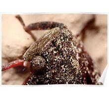 I, Ron Bark - Cicada Poster