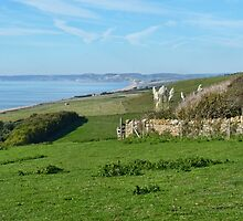 Overview From Abbotsbury Gardens by lynn carter