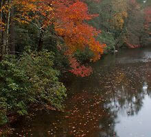 Linville River by Forrest Tainio