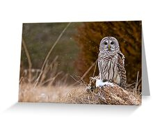 Barred Owl on log Greeting Card