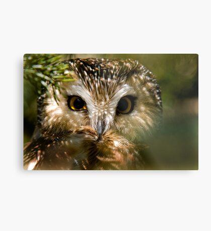 Northern Saw Whet Owl Metal Print