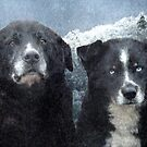 Snow Dogs by Tibby Steedly