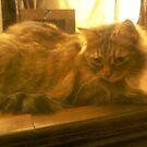 window cat by catnip addict manor