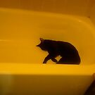 cat in the tub by catnip addict manor