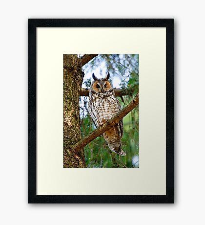 LEO - Long Eared Owl - Ottawa, Ontario Framed Print
