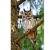 LEO - Long Eared Owl - Ottawa, Ontario Photographic Print