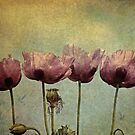 ~Pretty Maids all in a Row~ by Lynda Heins