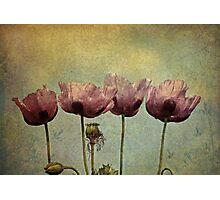 ~Pretty Maids all in a Row~ Photographic Print
