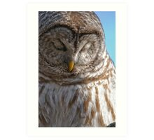 Barred Owl in Tree - Brighton, Ontario Art Print