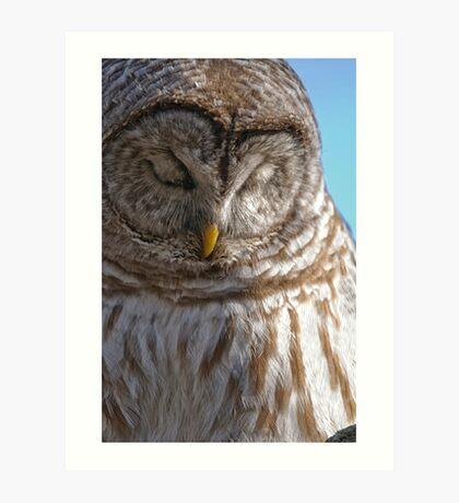 Barred Owl in Tree - Brighton, Ontario Art Print
