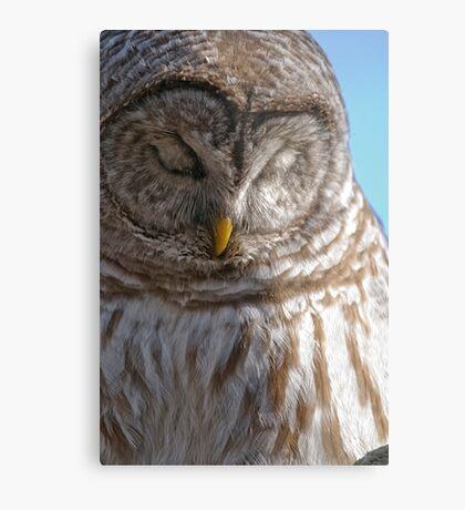 Barred Owl in Tree - Brighton, Ontario Metal Print
