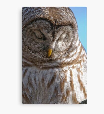 Barred Owl in Tree - Brighton, Ontario Canvas Print