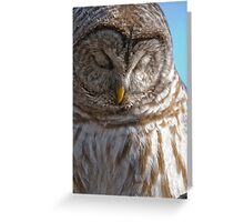 Barred Owl in Tree - Brighton, Ontario Greeting Card