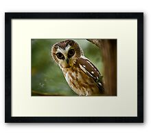 Northern Saw Whet Owl On Branch Framed Print