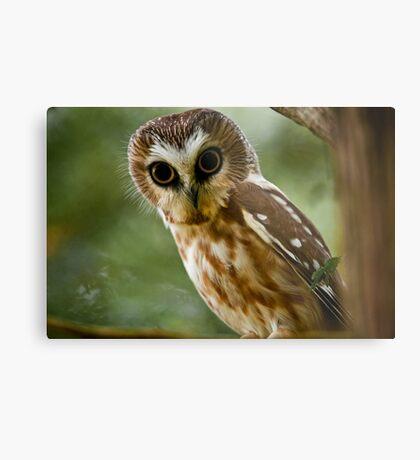 Northern Saw Whet Owl On Branch Metal Print