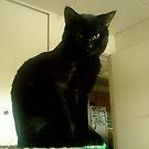 perfect little pose by catnip addict manor