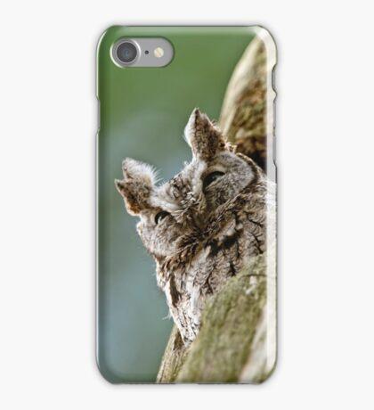 Screech Owl - Ottawa, Ontario iPhone Case/Skin