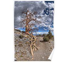 Elder Tree Poster