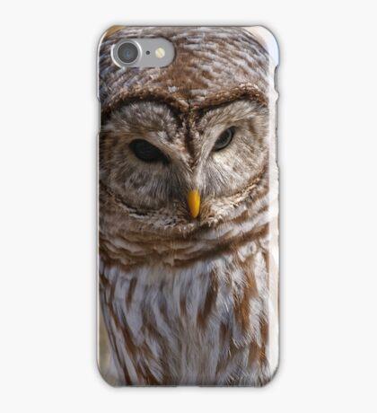 Barred Owl - Brighton Ontario iPhone Case/Skin