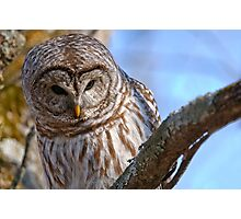 Barred Owl - Brighton Ontario Photographic Print