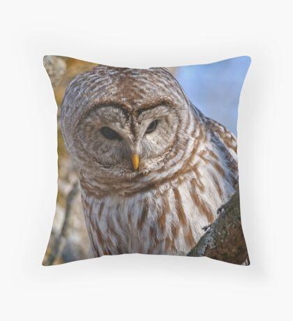 Barred Owl - Brighton Ontario Throw Pillow