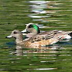 American Wigeon ~ Pair by Kimberly P-Chadwick