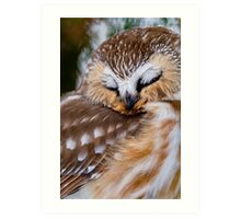 Northern Saw Whet Owl - Ottawa, Canada Art Print