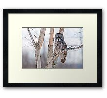 Great Grey Owl - Dunrobin Ontario Framed Print
