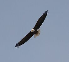 Soaring with Eagles 1 by Don Rankin