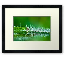 Water Spike  Framed Print
